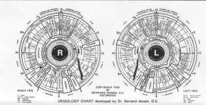 מפת האירידיולוגיה של ברנרד ג'נסון.